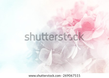 sweet color flowers in soft color and blur style on mulberry paper texture    - stock photo