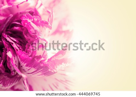 Sweet color petal exotic pink rose on beige romantic gradient background - stock photo
