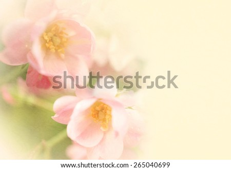 sweet color roses flower in soft and blur style on mulberry paper texture - stock photo