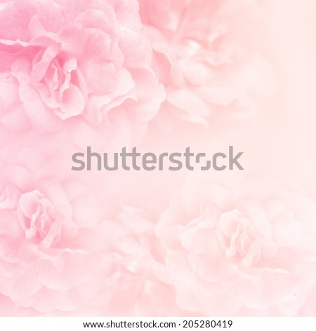 sweet color roses in soft and blur style for background - stock photo