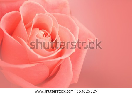 Sweet color roses in soft color and blur style on mulberry paper texture