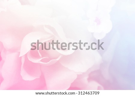 Sweet color roses in soft style for background - stock photo