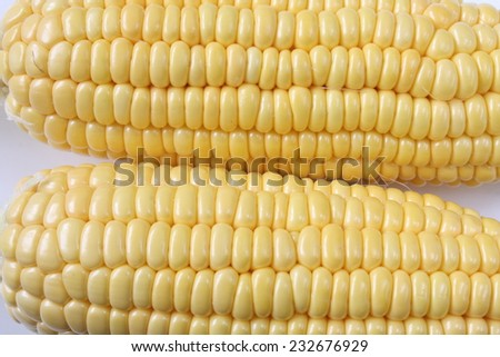 Sweet  corn close up on white background for healthy living