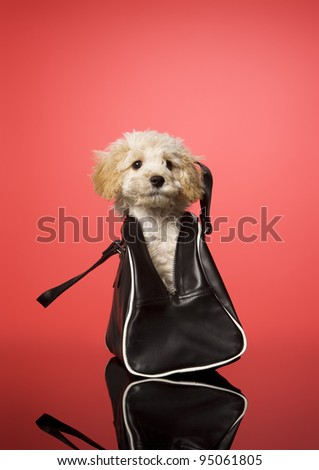 Sweet dog in a bag on red background