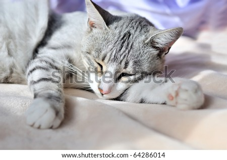 sweet dreams of cat on the sofa at home - stock photo