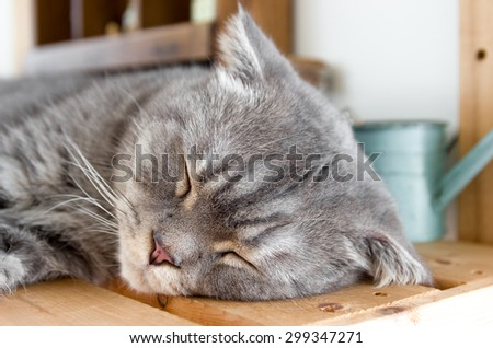 Sweet dreams of tabby cat on the wooden table - stock photo