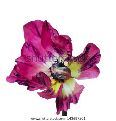 sweet flora on white isolate background - stock photo