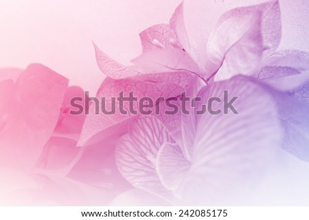 Sweet flowers in soft color style for background