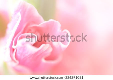 sweet flowers in soft style for background