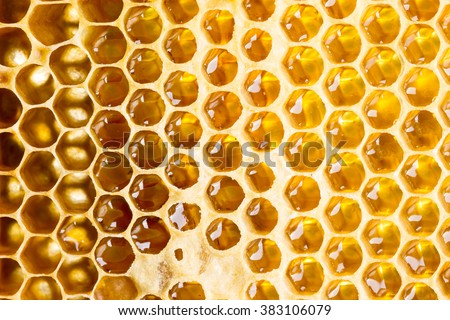 Sweet fresh honey in honeycomb frame - stock photo