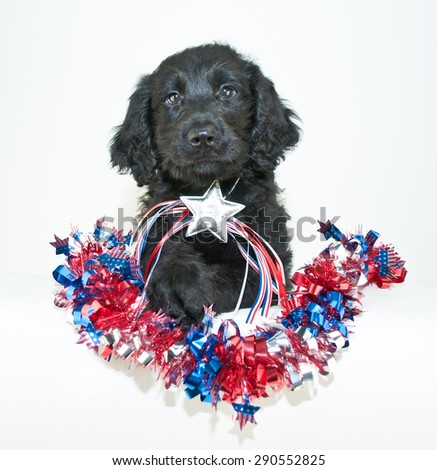 Sweet Golden-Doodle puppy with patriotic garland around him, wearing a patriotic star on a white background.