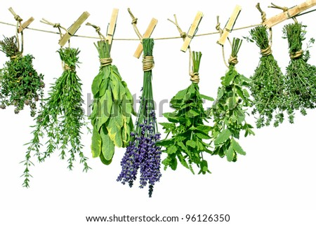 sweet  herbs herbs hanging to dry on a line - stock photo