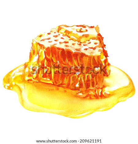 sweet honeycombs with honey, isolated on white - stock photo