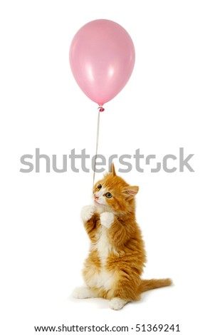 Sweet kitten holding a pink balloon. Taken on a white background.
