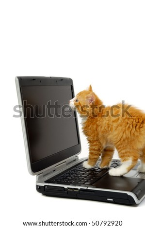 Sweet kitten is looking at the screen on a laptop. Taken on a white background. - stock photo