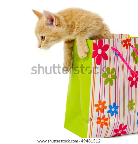 Sweet kitten is sitting in a shopping bag. - stock photo