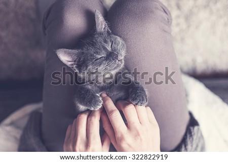 Sweet Kitten taking a nap - stock photo