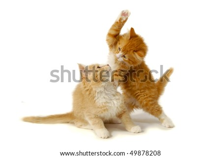 Sweet kittens are fighting and playing on a white background. - stock photo