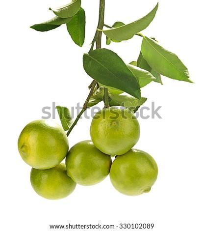 Sweet lemon bough isolated on white background.   - stock photo