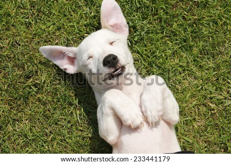 sweet little baby dog with white fur smiling at the camera - stock photo