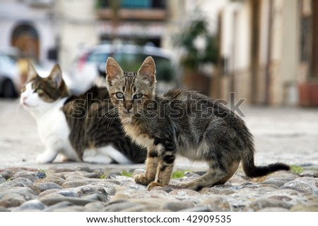 Sweet little cat sitting on the street in one of Sicilian towns - stock photo