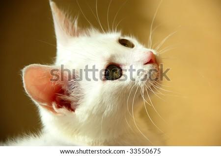 sweet little white kitten with green eyes - stock photo