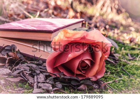 sweet love theme with color effect - closed book with rose on the moss in the forest at sunset - stock photo