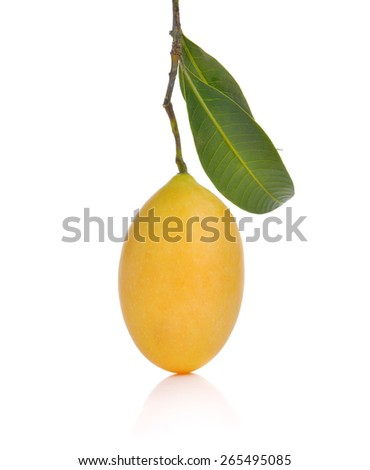 sweet Marian plum thai fruit isolated on white background (Mayongchid Maprang Marian Plum and Plum Mango,Thailand)