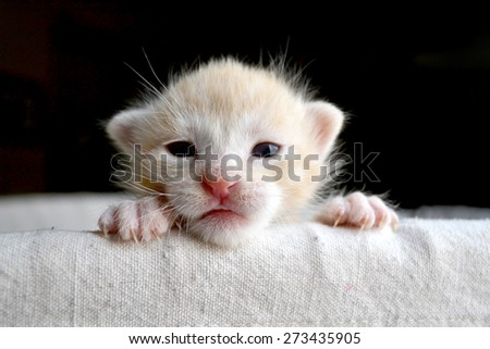 Sweet newborn orange tabby kitten peeking over edge of basket - stock photo