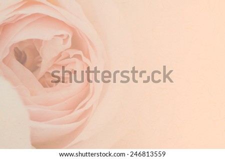 Sweet peach rose, Abraham Darby Rose, English Rose with paper texture for soft background. - stock photo