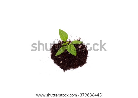 sweet pepper spring green sprouts closeup - stock photo