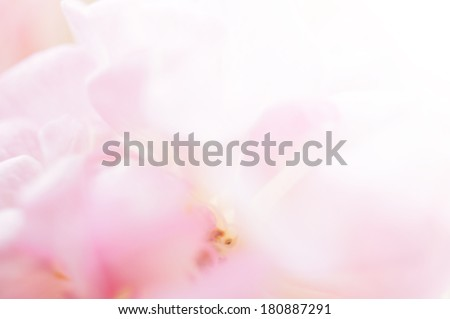 sweet pink blur background         - stock photo