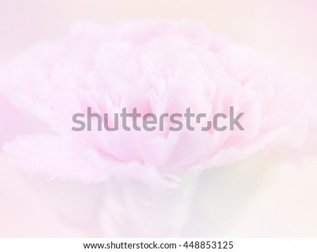 Sweet pink Carnation flower with water drop background made from color filters effect.