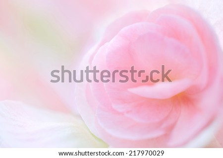 sweet pink floral in soft style for background