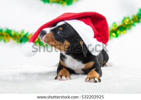 Sweet puppy in red santas hat