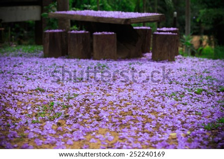 Sweet Purple Flowers on the ground - stock photo