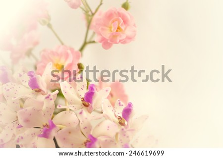 sweet roses and orchid in soft color and blur style