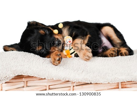 sweet sleeping puppy - stock photo