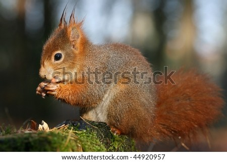 Sweet squirrel - stock photo
