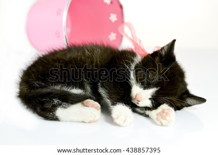 Sweet tabby kitten sleeping with a pink bow on white background, gift, happy birthday