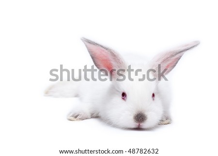 Sweet white little easter bunnies isolated on white - stock photo