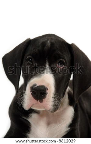 Sweet young dog on white background