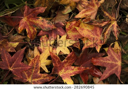 Sweetgum set of sheets of different colors on the floor