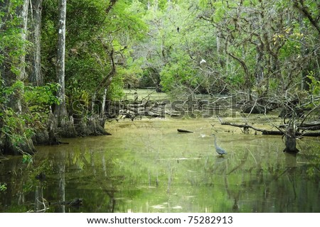 Sweetwater Strand, Big Cypress National Preserve, Florida Everglades - stock photo