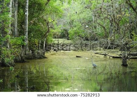 Sweetwater Strand, Big Cypress National Preserve, Florida Everglades - stock photo