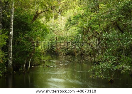 Sweetwater Strand in the Florida Everglades, Big Cypress National Preserve - stock photo