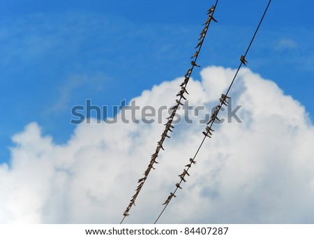 Swifts on wires under blue sky