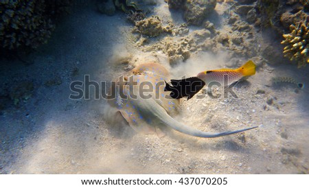 swimming fish in the red sea