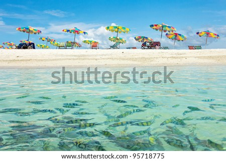 Swimming Fishes and Beautiful Beach in Sunny Day at Phuket Thailand - stock photo