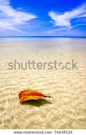 Swimming leaf in the tropical sea - stock photo